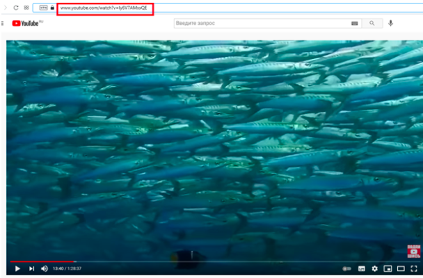 How to download video YouTube app for free and online on PC